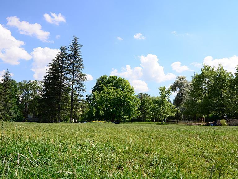 łąka ilas